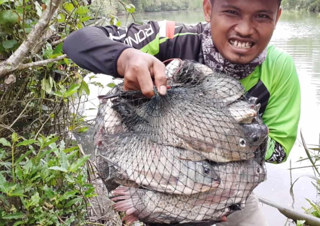 Umpan ikan nila paling jitu